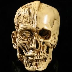 Art Sketch Resin Skull Model Medical Human Musculoskeletal Home Decoration (As Show)