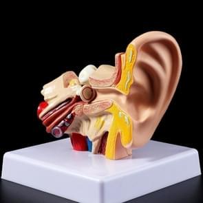 Medische prop model 1 5 Times Vergrootglas officiële menselijk oor anatomie model (als show)
