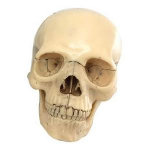 15 Parts / Set Assembled Human Disassembled Skull Color Mini Anatomy Model(Primary Color)