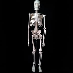 45cm Human Skeleton Bone Model Medical Teaching Model
