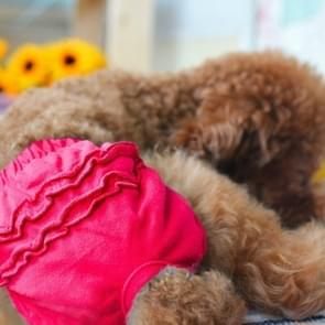 Huisdier hond panty korte sanitaire broek kleding huisdier benodigdheden  grootte: M (Rose rood)