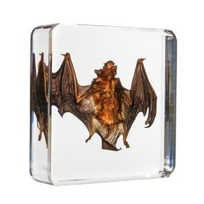 Acrylic Lucite Transparent Bat Specimens Animal Insect Bat Amber Educational Teach Supply Biological Collection 75x75x20mm