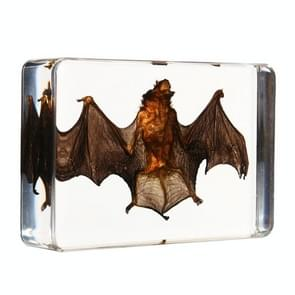 Acrylic Lucite Transparent Bat Specimens Animal Insect Bat Amber Educational Teach Supply Biological Collection 87x57x20mm