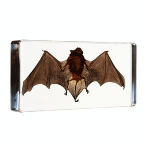 Acrylic Lucite Transparent Bat Specimens Animal Insect Bat Amber Educational Teach Supply Biological Collection 138x63x20mm